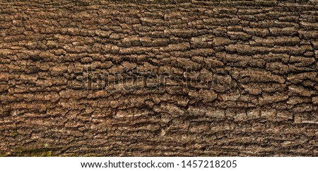 Relief texture of the brown bark of a tree with green moss on it. Horizontal photo of a tree bark texture. Relief creative texture of an old oak bark. #1457218205