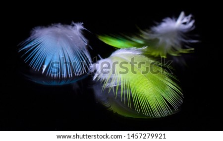 Feathered bird Beautiful feather Background feather #1457279921