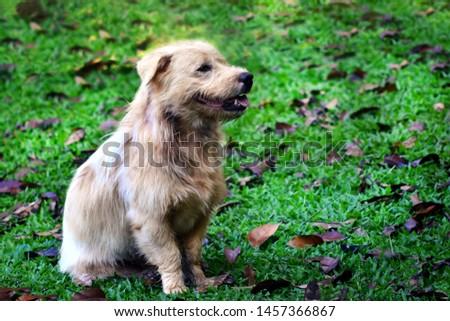 Dog sitting in the garden #1457366867