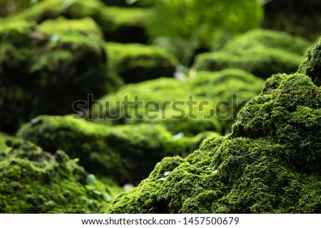 Beautiful Bright Green moss grown up cover the rough stones and on the floor in the forest. Show with macro view. Rocks full of the moss texture in nature for wallpaper. soft focus. Royalty-Free Stock Photo #1457500679