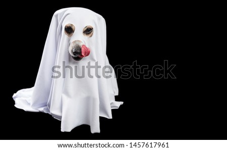 Halloween treats waiting. Pretty dog ghost. Black and white