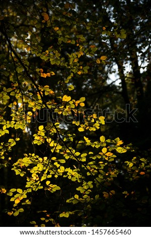Stunning vibrant Autumn Fall trees in Fall color in New Forest in England with beautiful sunlight making colors pop against dark background #1457665460
