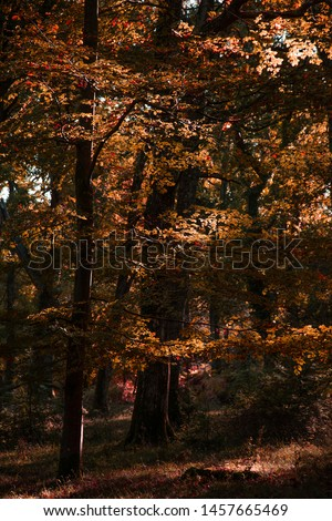 Stunning vibrant Autumn Fall trees in Fall color in New Forest in England with beautiful sunlight making colors pop against dark background #1457665469