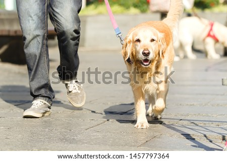 Unrecognizable people Walking Dog in the city #1457797364