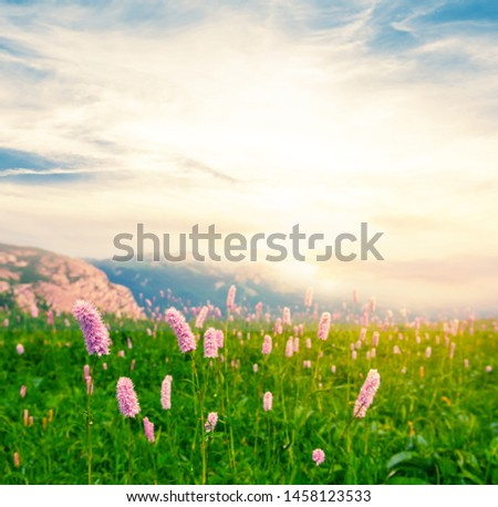 green mountain field with flowers at the dramatic sunset #1458123533