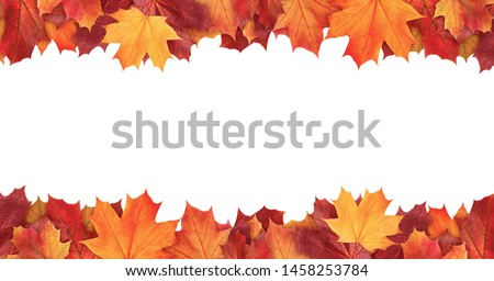 Amazing colorful background of autumn maple tree leaves background with white empty space. Multicolor maple leaves autumn background. High quality resolution picture