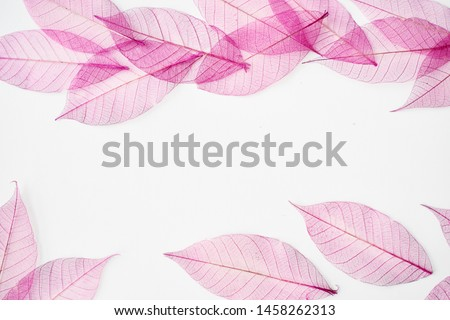 Skeleton Leaves Composition on white background #1458262313