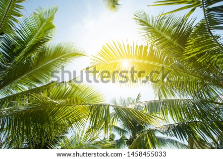 tropical palm leaf background, coconut palm trees perspective view