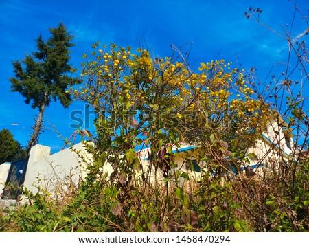 Terrace Farming in Bageshwar Hill, Uttarakhand Hill, Uttarakhand #1458470294