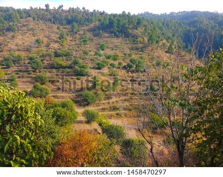 Terrace Farming in Bageshwar Hill, Uttarakhand Hill, Uttarakhand #1458470297
