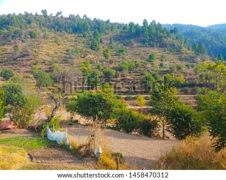Terrace Farming in Bageshwar Hill, Uttarakhand Hill, Uttarakhand #1458470312