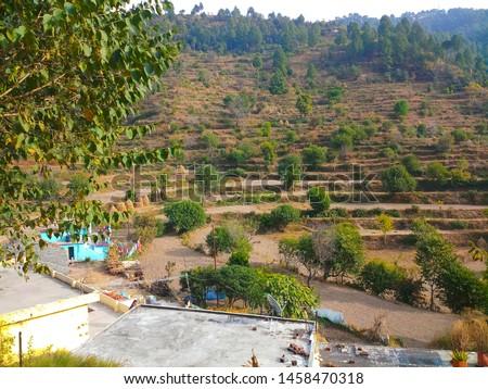 Terrace Farming in Bageshwar Hill, Uttarakhand Hill, Uttarakhand #1458470318