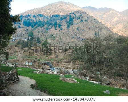 Terrace Farming in Bageshwar Hill, Uttarakhand Hill, Uttarakhand #1458470375
