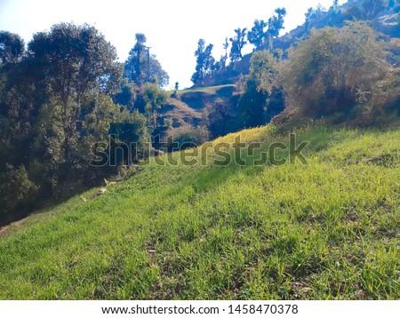 Terrace Farming in Bageshwar Hill, Uttarakhand Hill, Uttarakhand #1458470378