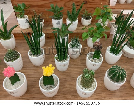 Manila, Philippines - July 20, 2019: Cactus and Succulent Fair at the Farmers Mall Cubao #1458650756