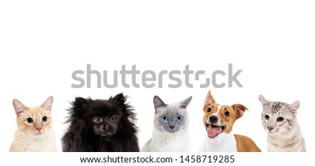 Collage of domestic animals with copy space over heads. Dogs and cats sitting together. #1458719285