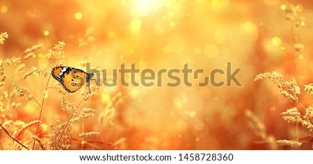 Beautiful butterfly on golden field meadow grass, nature landscape. pastoral rural artistic image. summer or autumn season. copy space #1458728360