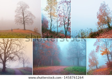 Collage with beautiful views of misty autumn. #1458761264
