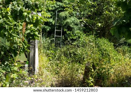 Overgrown messy garden background image