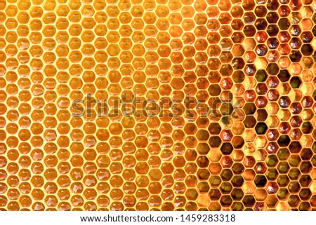 Background texture  of a section of wax honeycomb from a bee hive filled with golden honey|. Beekeeping concept Royalty-Free Stock Photo #1459283318