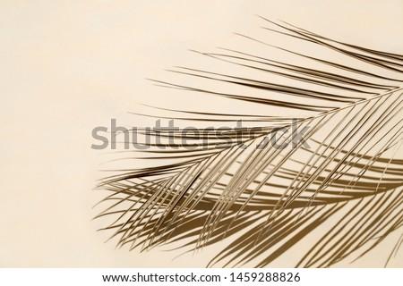 Palm leaf on beige pastel background Royalty-Free Stock Photo #1459288826