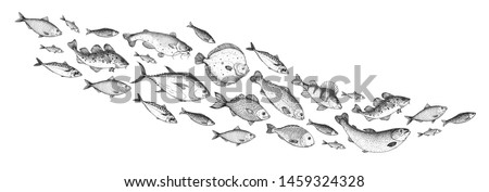 Fish sketch collection. Hand drawn vector illustration. School of fish vector illustration. Food menu illustration. Hand drawn fish set. Engraved style. Sea and river fish #1459324328