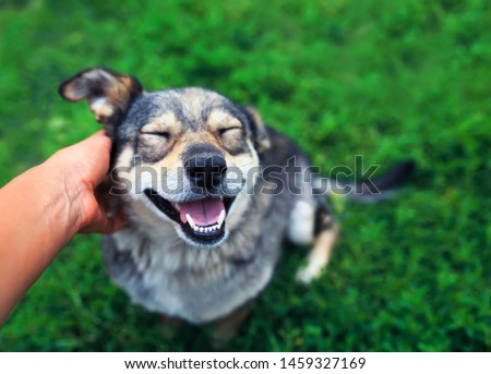 cute brown dog smiling happily and closed his eyes of pleasure from stroking the hands of the man on the street #1459327169