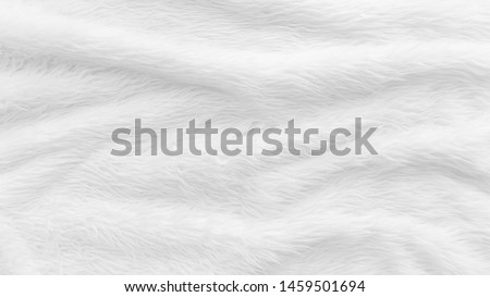 Fur background with white soft fluffy furry texture hair cloth of sheepskin for blanket and carpet interior decoration #1459501694