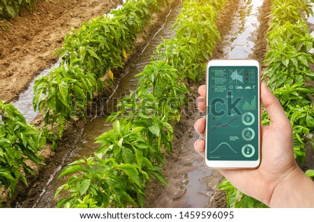A hand is holding a smartphone with infographics on the background of traditional watering pepper plantations. Farming and agriculture. Watering caring for plants, fertilizer, cultivation. farm field #1459596095