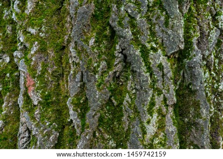 old linden bark covered with moss. relief bark resembles view high mountains wooded from above. texture old bark with moss. Very nice macro plan. moss on bark #1459742159