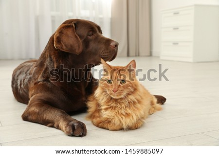 Cat and dog together on floor indoors. Fluffy friends #1459885097