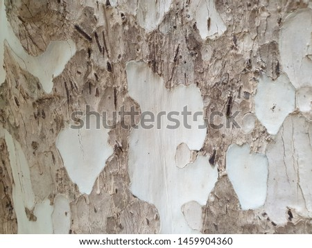 tree bark texture for background #1459904360