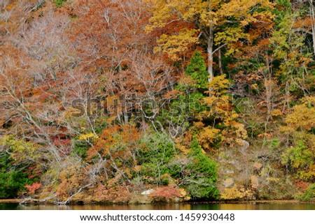 """ Four seasons of Jūniko"" Fukaura Town Aomori    #1459930448"