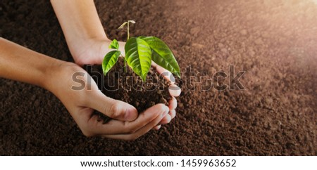 hand holding small tree for planting. concept green world. eco earth day #1459963652