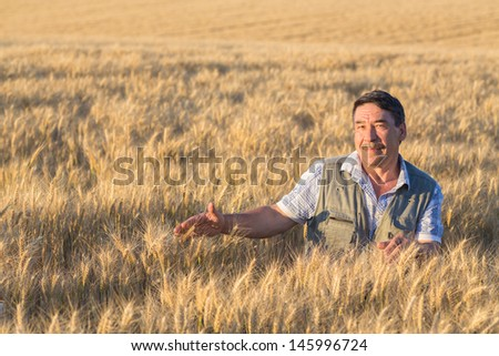 farmer standing in a wheat field, looking at the crop #145996724