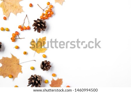 Autumn creative composition. Dried leaves, cones and rowan on white background. Autumn, fall, halloween, thanksgiving day concept. Flat lay, top view, copy space #1460994500