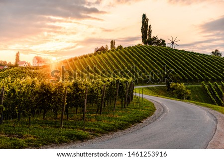 Asphalt road leading through country side of south Austrian Vineyards in south styria. Sunset view at grape hills. #1461253916