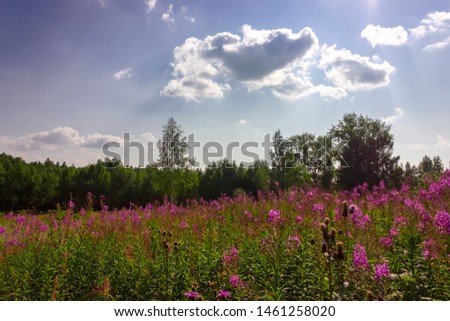 Summer meadow landscape with green grass and wild flowers on the background of a forest. #1461258020