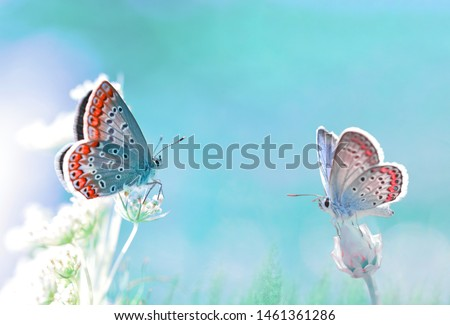 Dreamlike picture of two butterflies on flowers are ready to fly together. Romantic picture for Valentine's Day. Common blue butterflies on a blured fairytale wild meadow background at morning.