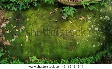 Beautiful green moss on the floor, moss closeup, macro. Beautiful background of moss for wallpaper. #1461494147