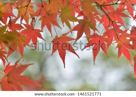 Red autumn maple leaves on a green background #1461521771