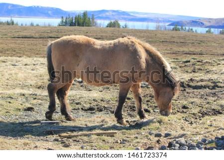 Icelandic horse photo in farm #1461723374