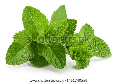 Fresh leaf mint green herbs ingredient for mojito drink, isolated on white background. #1461740558