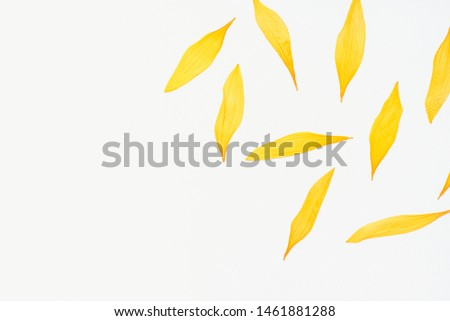 sunflower petals, sunflower petals on a white background, dried sunflower petals, yellow petals, herbarium #1461881288