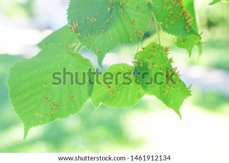 tree leaves affected by aphids. Insect pests and tree deseases. Organic food and agriculture. #1461912134