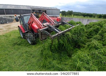 Normandy, August 2006. Alfalfa haylage. Compaction of the grass with a tractor #1462077881