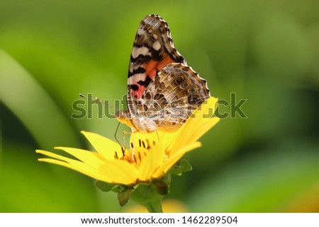 Real butterfly on yellow daisy in spring garden. Closeup.  Macro photography.  Copy space
