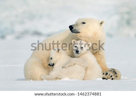 northern Ellesmere Island/Canada-01/21/2019.  photo of polar bear in Canada  #1462374881
