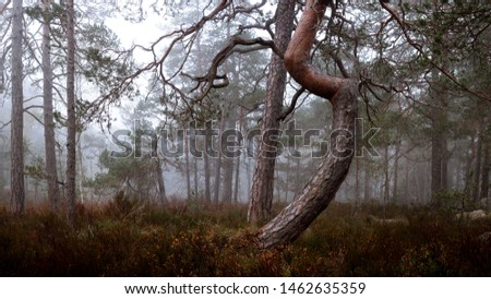 A bent tree in a foggy mire #1462635359