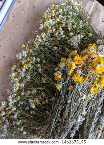 plants through the hot summer (herbs) #1462673195